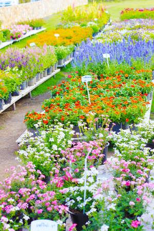 gardent photo