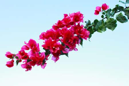 flower Stock Photo - 24658371