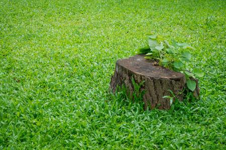 緑の芝生のフィールド上の切り株木の植物 写真素材