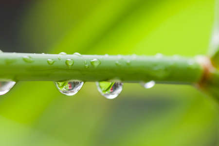 photos of pattern: Water Drops on the Leaf