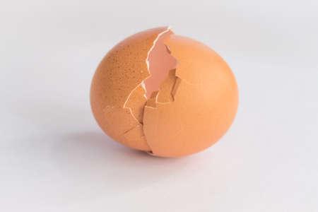 an egg shell: egg shell