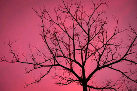 日没の背景で超高層ビルの乾燥木の枝