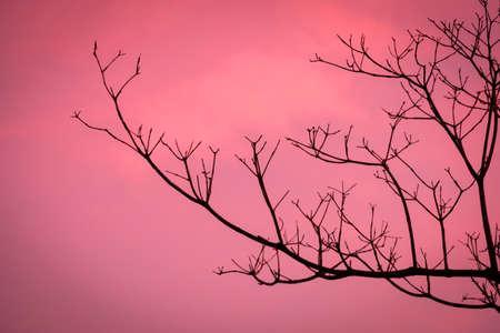 ドライ ブランチの夕焼けは美しかった。夕方には、木のシルエットは、非常に美しい