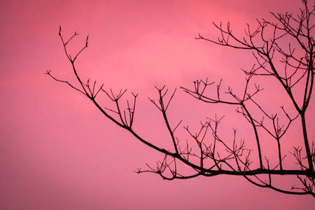 Beautiful sunset with dry branch.In the evening, the tree silhouette, very beautiful
