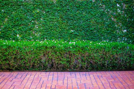道路のそばの木の壁。背景とコピースペースのための垂直庭の壁