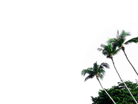 Coconut tree and grassland isolated on white background Banco de Imagens