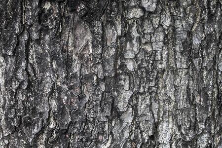 Old Wood Tree Texture Background Pattern Stockfoto