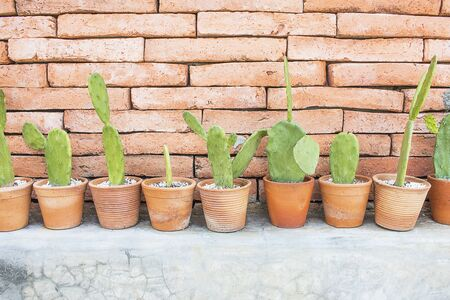 selective focus with copy space of Cactus  in brown pot The background is brick wall