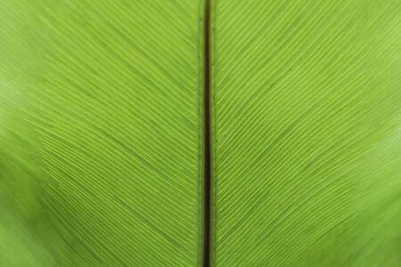 Green fern background Stockfoto