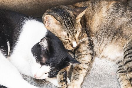 Two cats sleep together
