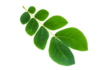 Leaves on a white background 免版税图像