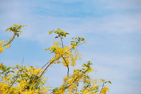 Small yellow flowers on the sky background