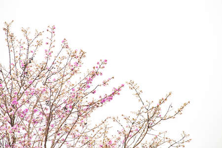 Many beautiful pink flowers on the tree