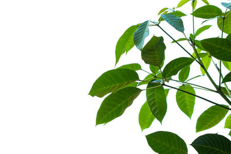 green leaves on white sky background