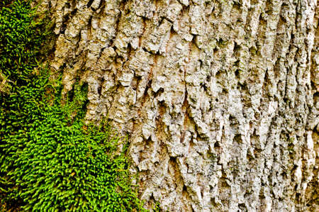 green moss on tree bark close-up  nature background photo