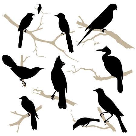 Birds silhouette set. Bird on branch. Bird icon collection.