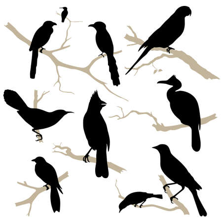 black and white line drawing: Birds silhouette set. Bird on branch. Bird icon collection.