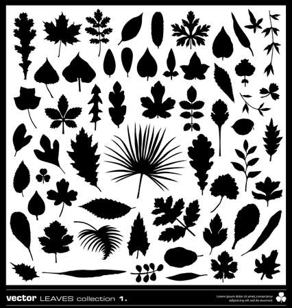 cedar tree: Leaf vector silhouettes collection. Different types of leaves. Illustration