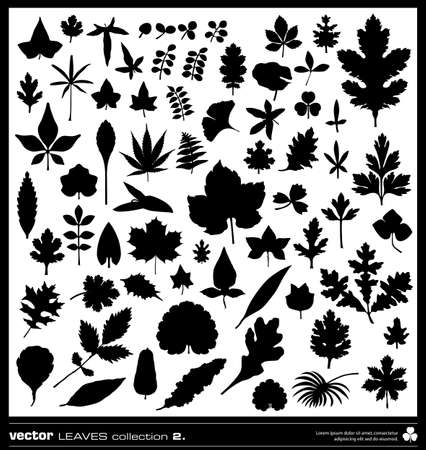 Leaf vector silhouettes collection. Different types of leaves. Illustration
