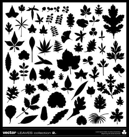 Blatt Vektor-Silhouetten Sammlung. Verschiedene Arten von Blättern.