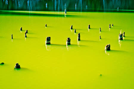 silty: Multiple tree stumps in green lake. Old waterlogged tree trunks. Lime green milky lake. Stock Photo