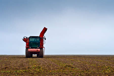 Agricultural vehicle harvesting sugar beet. Red combine harvester on field. Archivio Fotografico