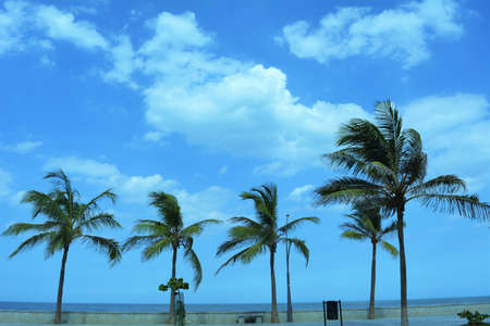 sway: Blowing in an ocean breeze, five palm trees sway on a clear blue sky.