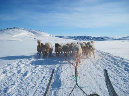 Ilulissat, Greenland, dogs pulling sledge