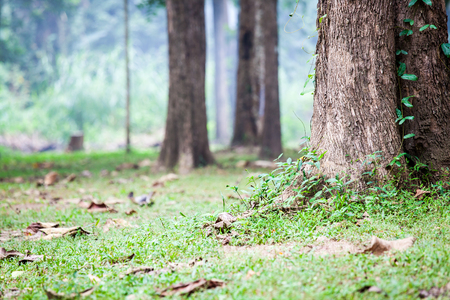 bases: Photo of tree bases on ground with green grass in forest