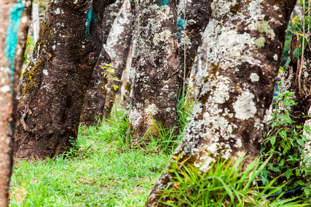 strong base: Base of trees and green grass Stock Photo