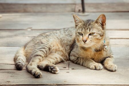 brown  eyed: Portrait of brown eyed cat on old wooden