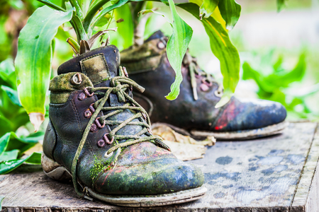 old shoes: ornamental plants on old shoes