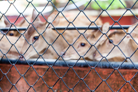 incarcerate: Cage and deer inside blur background Stock Photo
