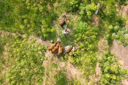 Aerial shot of children feed the cows by grass in farm. - Image 免版税图像