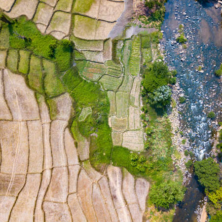 Stunning aerial view of beautiful texture of rice paddy harvested near the river turbulent flow. Beautiful natural backdrop.