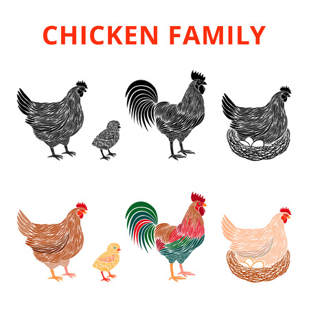 Chicken farm premium quality. Chickens family. Hen, chick, rooster.