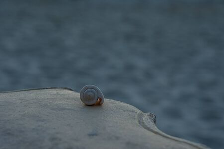 little snail on the beach, philippines, port barton. High quality photo