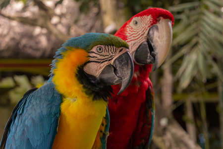 Close Up Colorfull parrot in the jungle, Indonesia, Ubud, Bali 2019