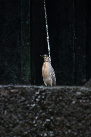 White bird in a water dam waiting for a fish to eat