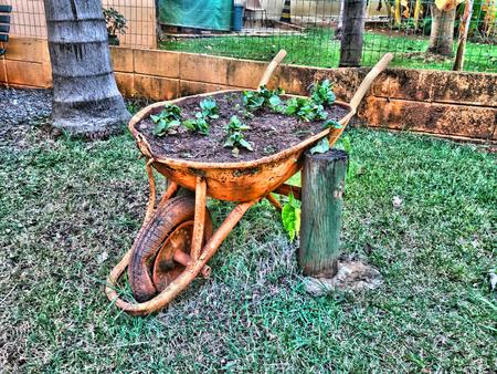 wheelbarrow with decorative plants in zoo Stok Fotoğraf
