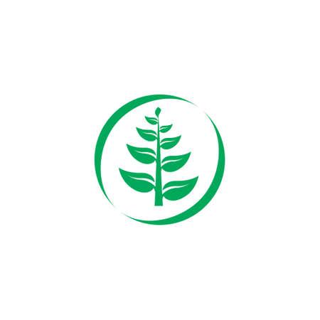 leaf branch herb symbol logo vector