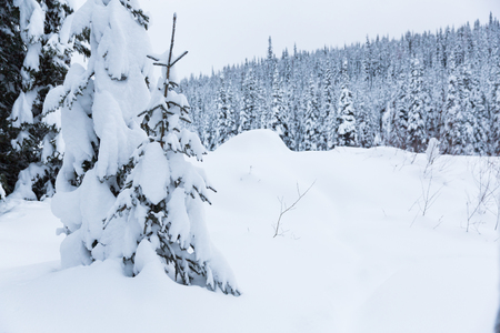 snow covered forest: Walk through the snow covered forest, British Columbia, Canada Stock Photo