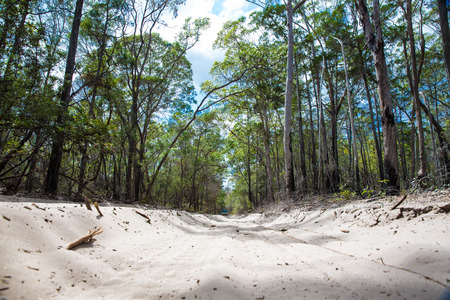 fraser island: Sand road throught the Satinay Forest, Fraser Island Stock Photo
