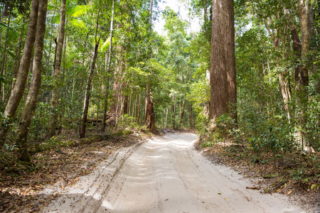 Sand road throught the Satinay Forest, Fraser Island Stock Photo