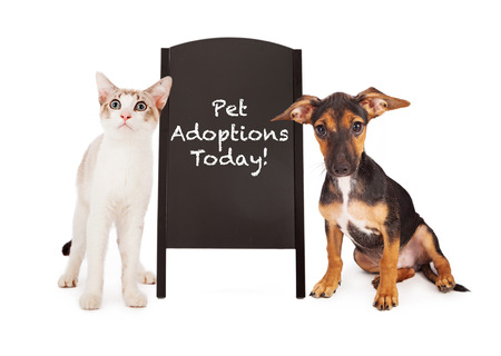 A young puppy and a kitten standing on the sides of a black chalkboard A-frame sign with the words Pet Adoptions Today written in chalk font 版權商用圖片