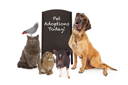 adopt: A group of common household pets around a black chalkboard A-frame sign indicating that there are pet adoptions today. Add your own message with chalk font underneath.