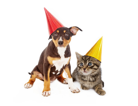 A young mixed breed puppy and a kitten wearing red and yellow birthday party hats sitting together against a white background