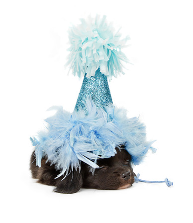 A small black puppy sleeping with a blue sparkly party hat on