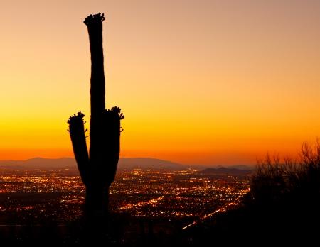 Una hermosa puesta de sol de oro sobre las luces de la ciudad del centro de Phoenix, con una silueta de una flor de cactus Saguaro en el primer plano. Foto de archivo