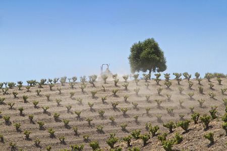 farmed: Young grape vines on a northern California wine country wine vineyard being farmed by a man riding a tractor Stock Photo